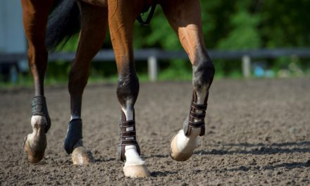 Early Stage Equine OA: Vets Consider 2.5% Polyacrylamide Gel Treatment