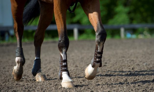 Finding Bisphosphonates in a Horse's Medical History