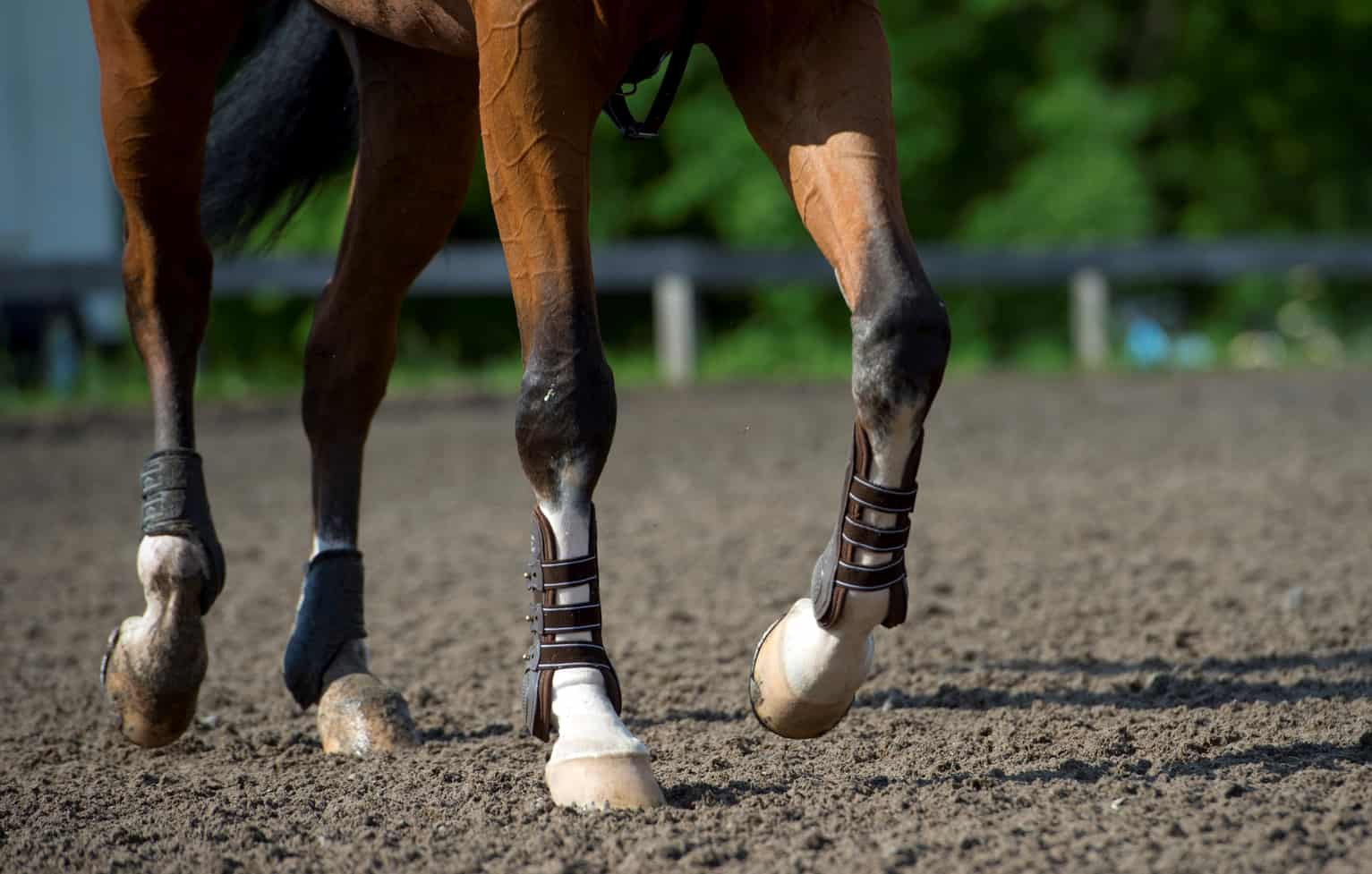 Early-Stage Equine OA: Vets Consider 2.5% Polyacrylamide Gel Treatment