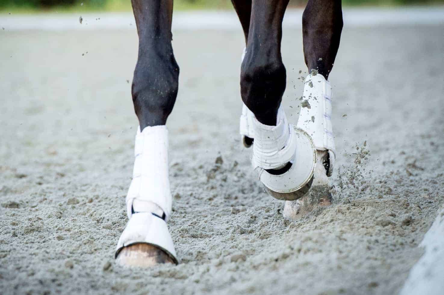 Footing Surfaces and Loading on Equine Legs