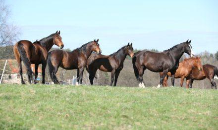 Do Horses Feel Empathy?