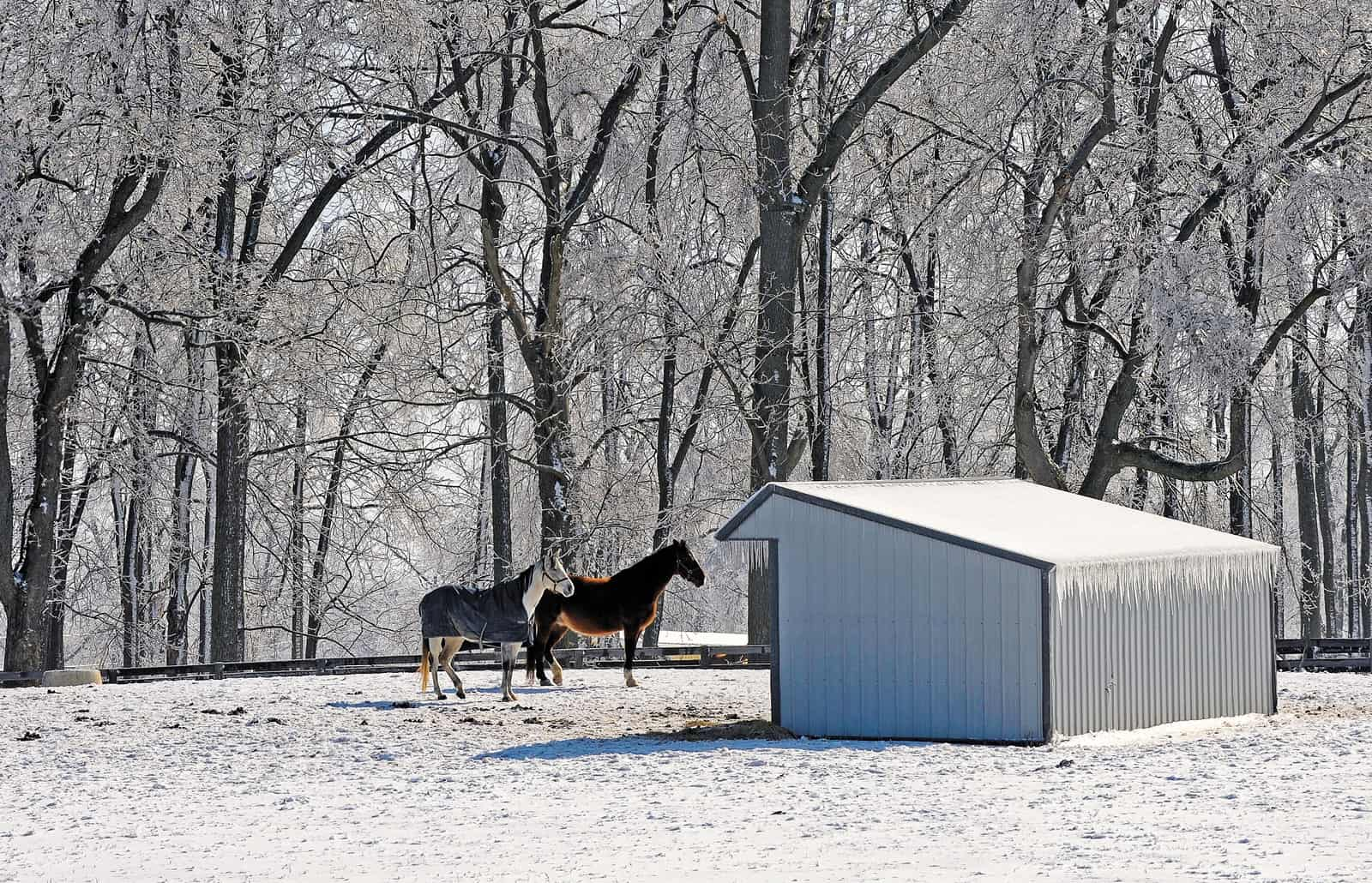 Winter Management for the Outdoor Horse