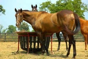 Cost-Effective Horse Feeding – The Horse
