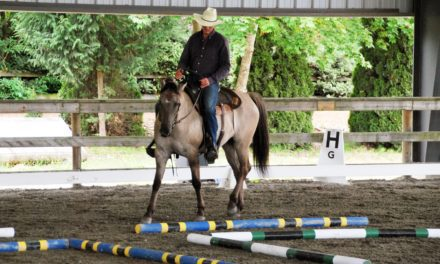 10 Learning Theory-Based Horse Training Principles