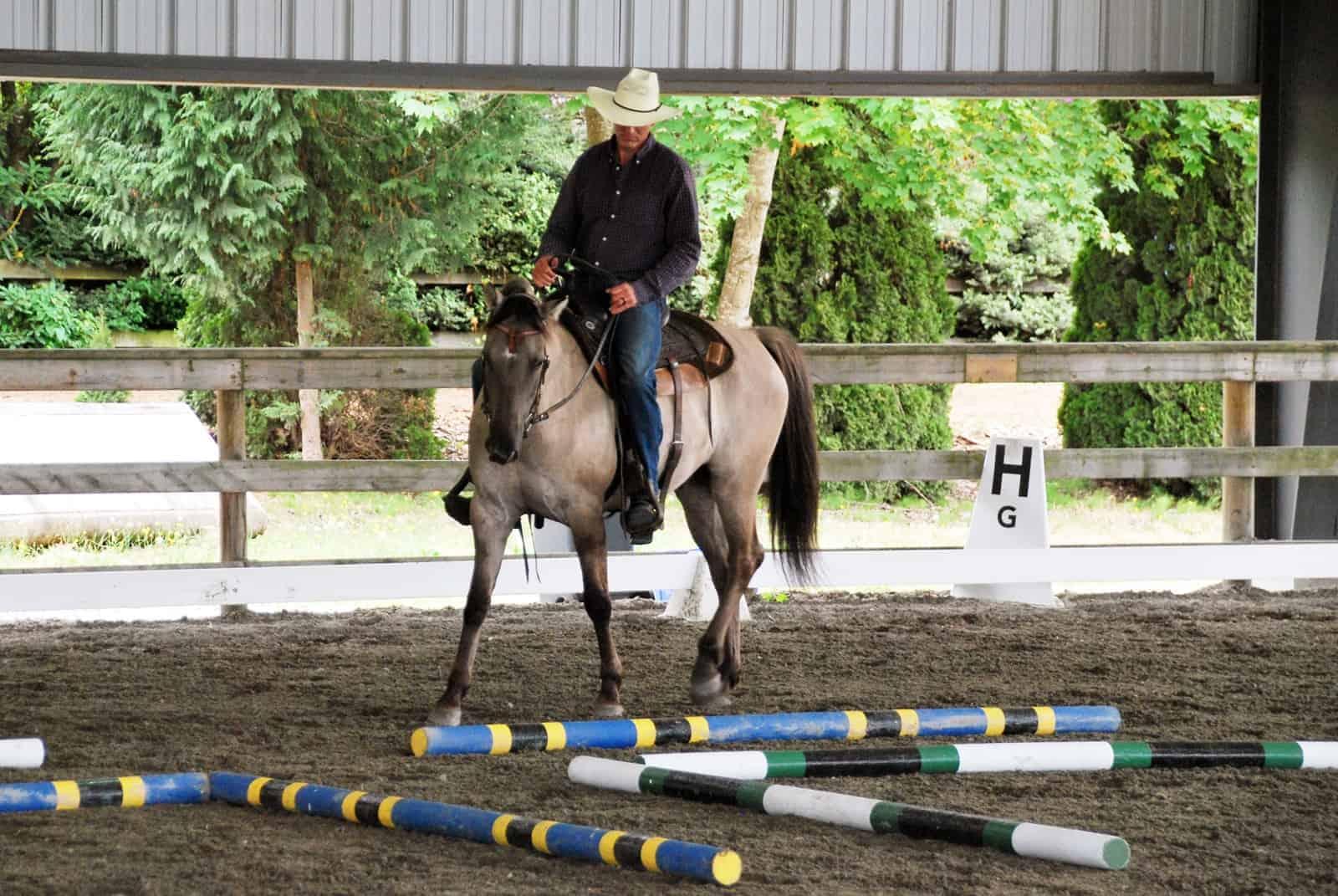 10 Learning Theory-Based Horse Training Principles