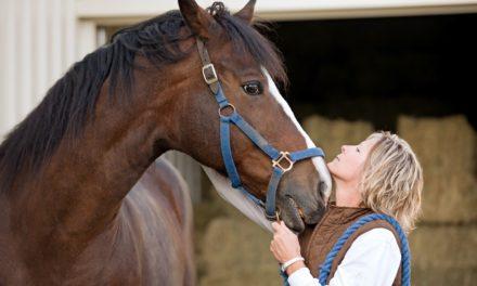 Do Horses Recognize Humans?