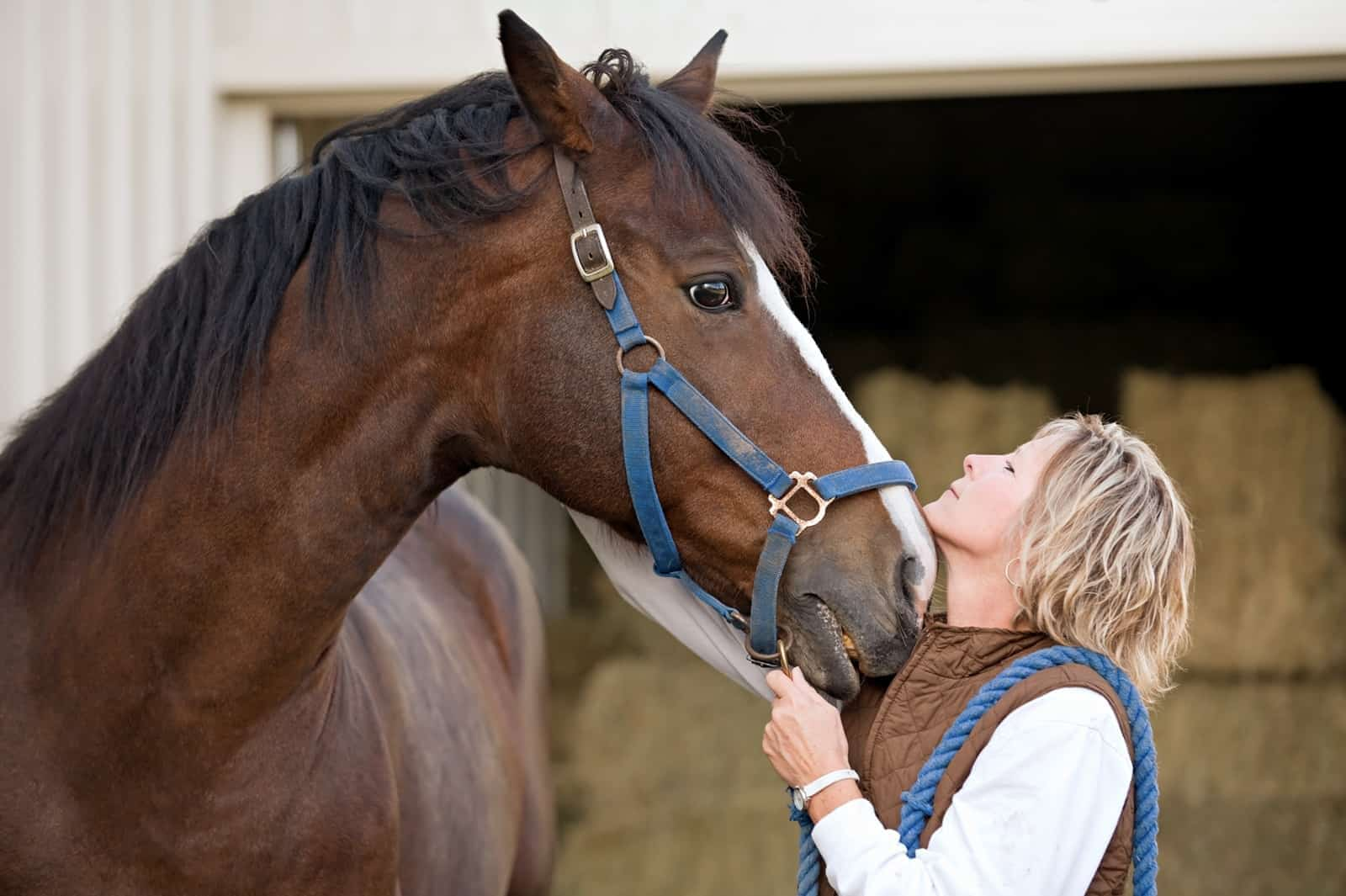 Do Horses Recognize Humans? – The Horse