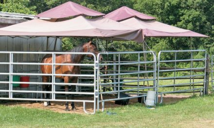 How to Set Up an Equine Disease Isolation Unit on Your Farm