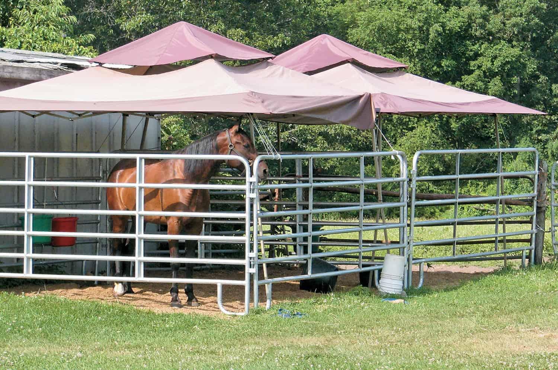 horse isolation