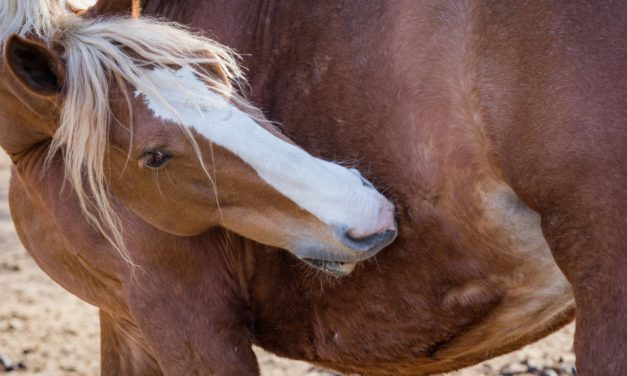 Which is Better: Skin or Blood Test for Equine Allergies?
