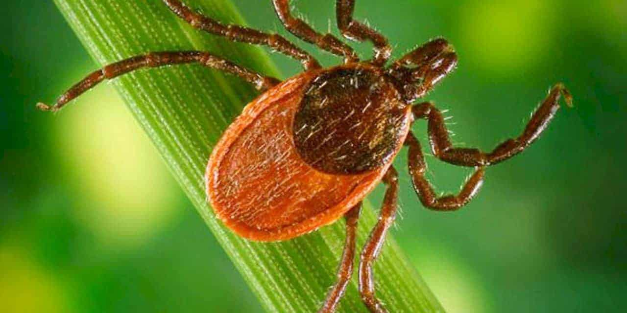 How to Protect Horses From Lyme Disease