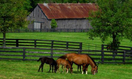 Kentucky's Equine Industry has $3 Billion Economic Impact