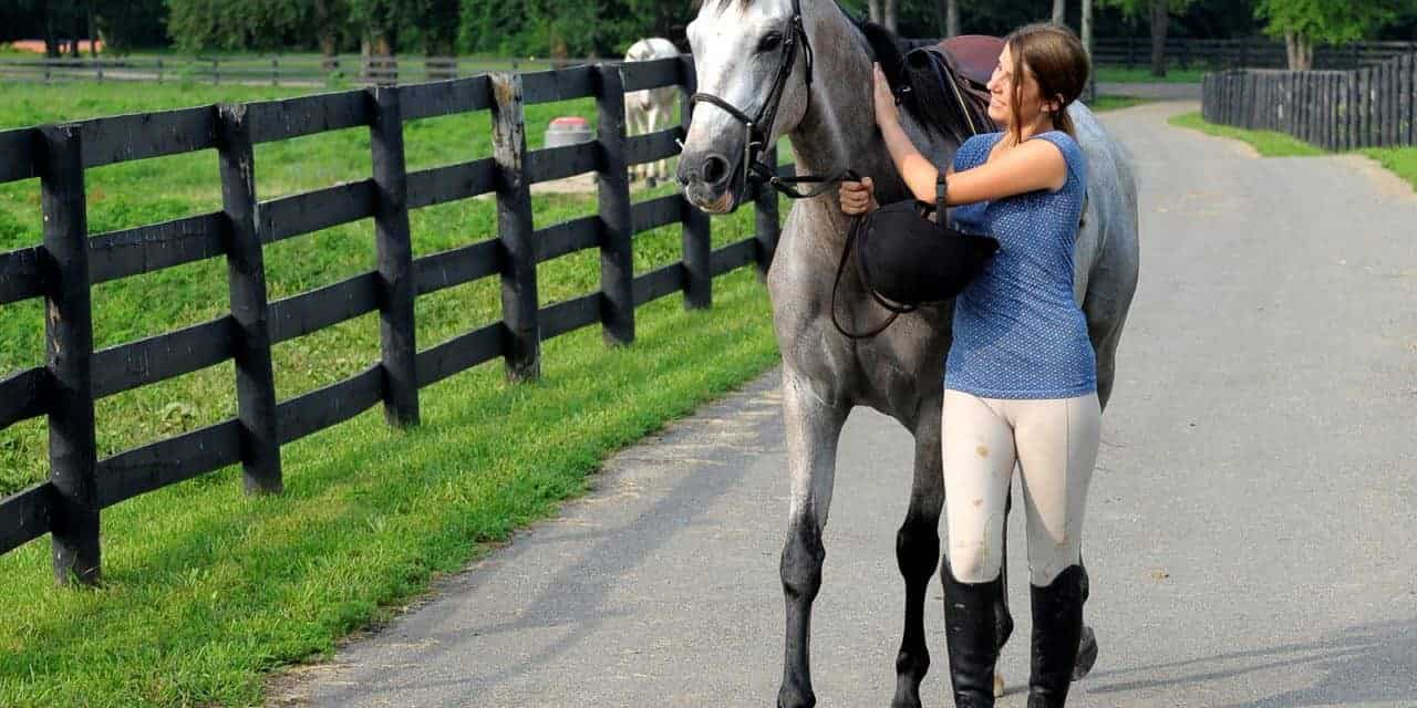 Horses' Inherent Response to Harsh, Soothing Tones Evaluated