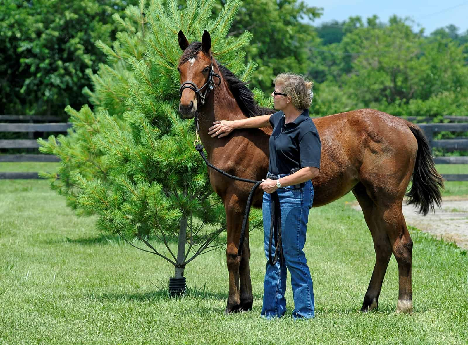 How Do I Get My Horse to Respect Me?