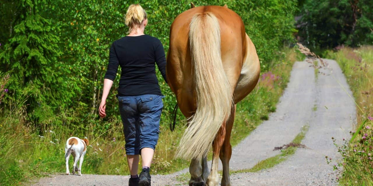 Tips For Managing Suspensory Disease The Horse