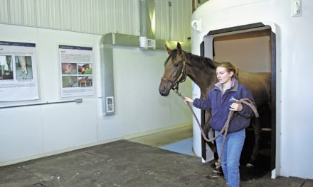 Equine Rehab Therapies: How Do They Work?