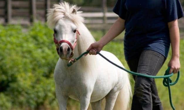 Anesthetizing Mules, Miniature Horses, and More