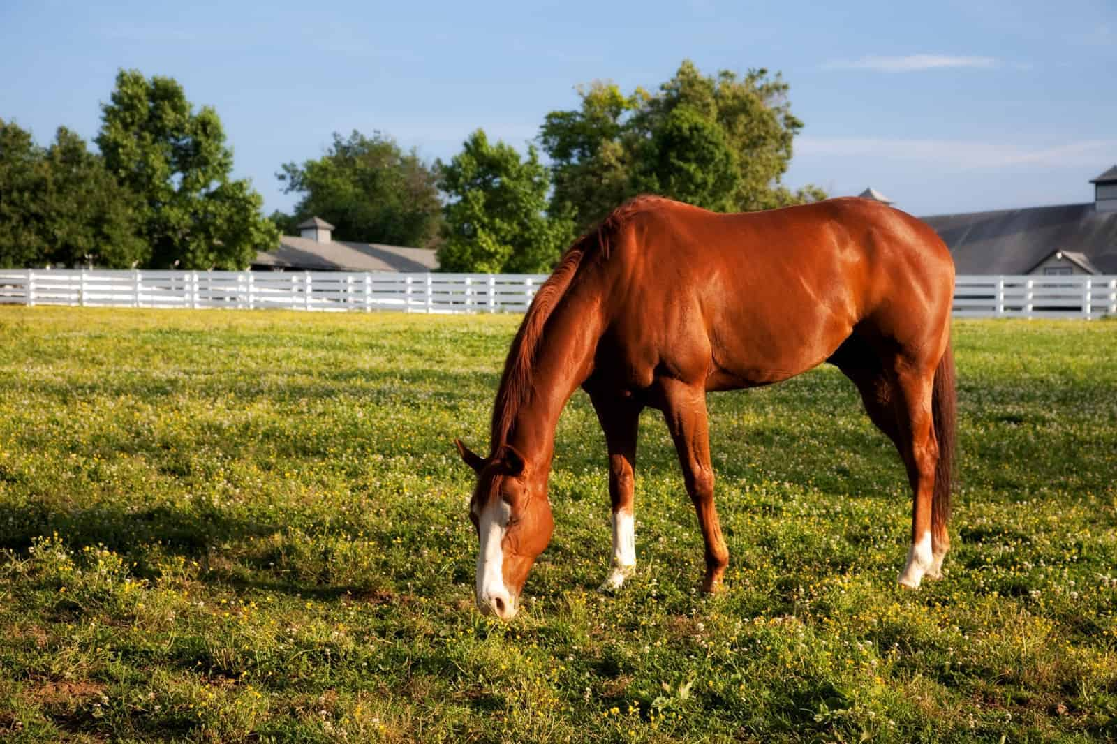 Equine Microbiome Update: Study Reviews Research