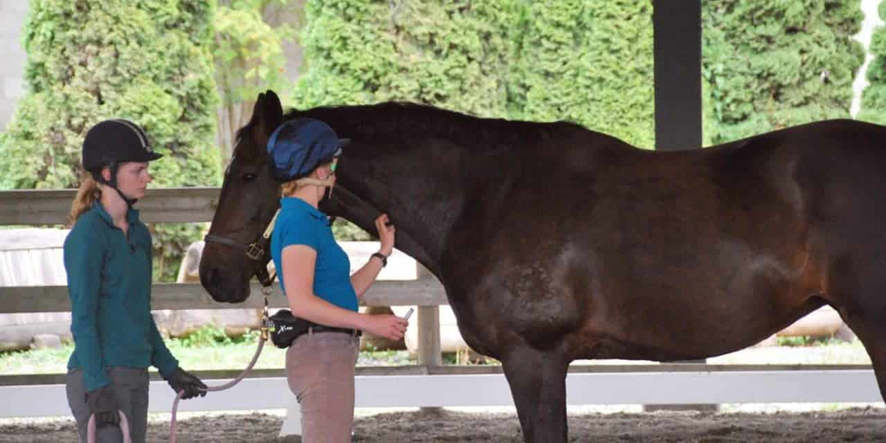 Can Learning Theory Lower Equine Vets' Injury Risk?