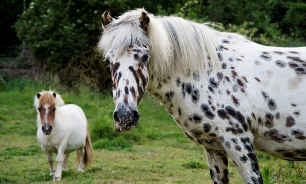 How Your Horse Got His Color (And Why You Should Care)