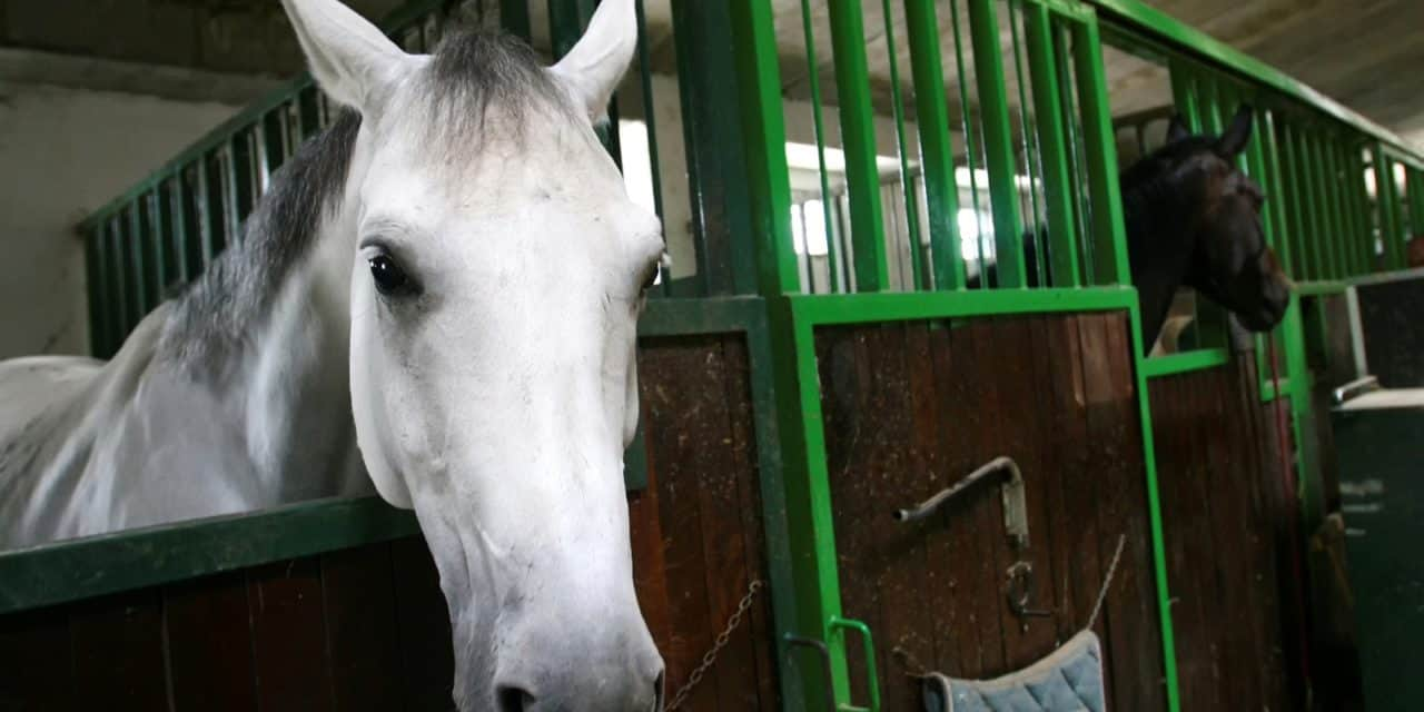 Is Equine Coronavirus Prevalent in Nasal Secretions?