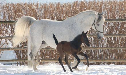 Female Equine Embryo Survival Studied