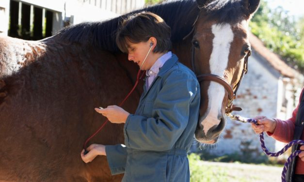 Equine First-Aid Basics, Part 1