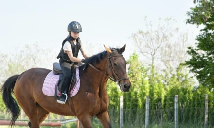 The Liability of Leasing a Horse to a Kid