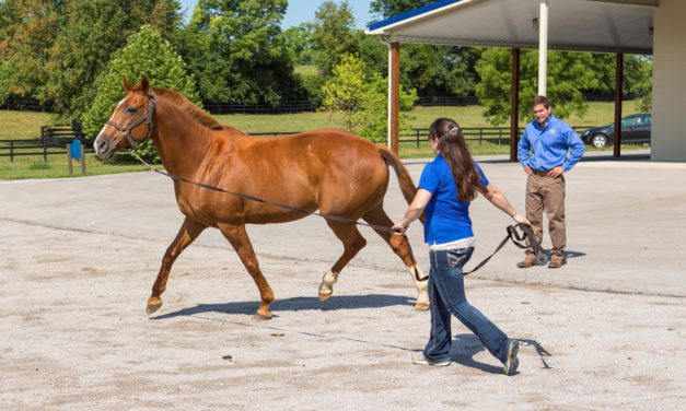 3-Legged Lameness in Horses: The Likely Players