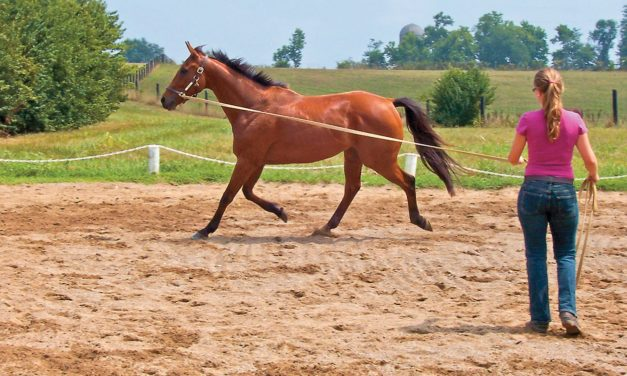 Can Exercise Help an EPM Horse?