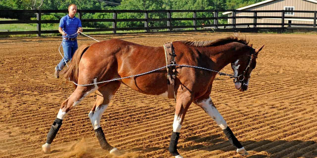 Researcher: Work Objectively to Understand Equine Behavior