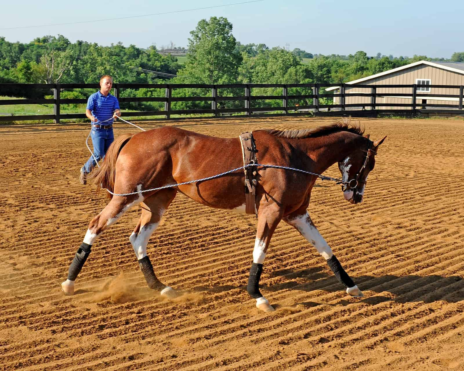 Conditioning Young Horses – The Horse