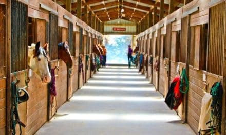 Equine Boarding Barns and Biosecurity