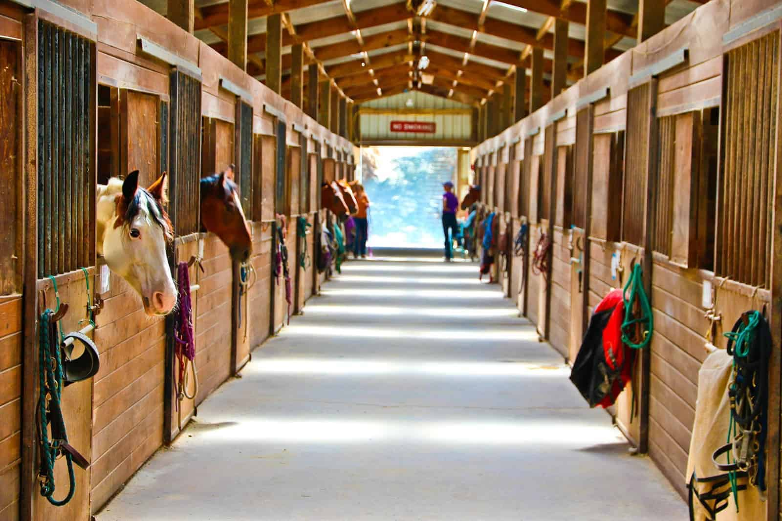 How to Successfully Manage a Horse Boarding Business