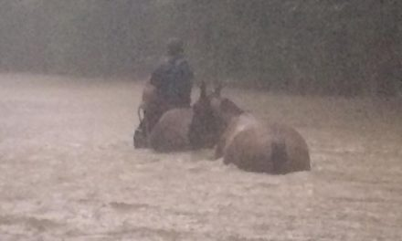Flooding Challenges Humans, Horses in Louisiana