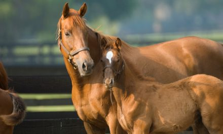 Gastrointestinal Drug Safe for Use in Pregnant Mares