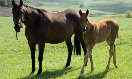 Soil Selenium Levels and Equine White Muscle Disease