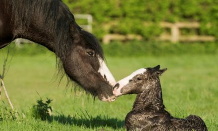 Get Ready For Your Foal!