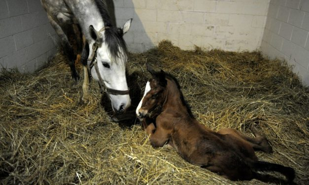 Preparing for a Winter Foaling