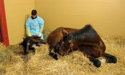Predicting Foaling: Calving Alert System Might Work for Horses, Too