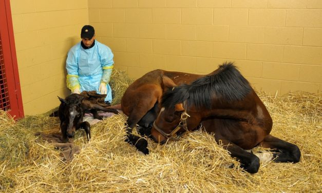 What to Expect During Foaling