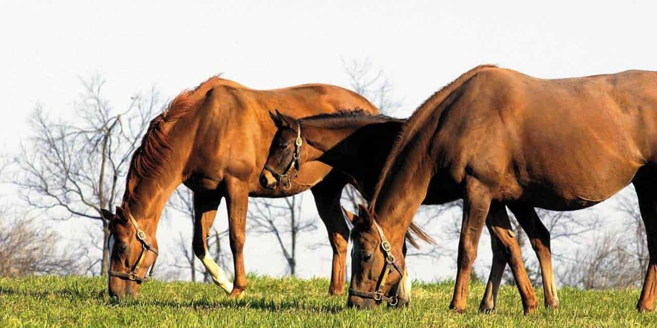 Fescue Grass Toxicity in Broodmares