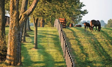Kentucky Horse Farms Can Apply for Disaster Relief
