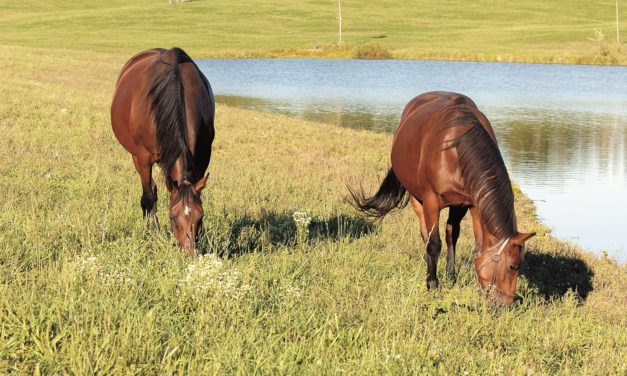Fescue Toxicosis Research in Horses and Cattle