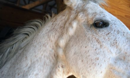 Old Gray Horses and Melanomas