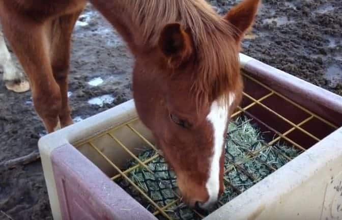 slow feed diy at feeder feeders pm horse screen nation shot hay