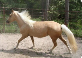 Reward Offered in Missing Texas Horse Case