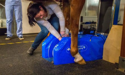 10 Soft Tissue Injury Resources on TheHorse.com