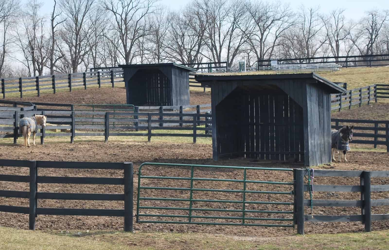 Winter Horse Pasture and Paddock Management