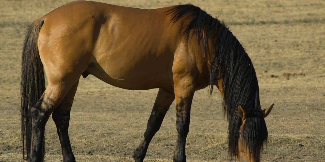 Image result for How Horse Supplements Add Value To Horse Daily Nutrition Need?